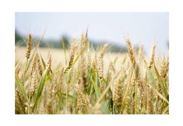 ที่ดินสำหรับขายในเซอร์เบีย – กฎหมายว่าด้วยการเปิดเสรีที่ดินเพื่อเกษตรกรรม?